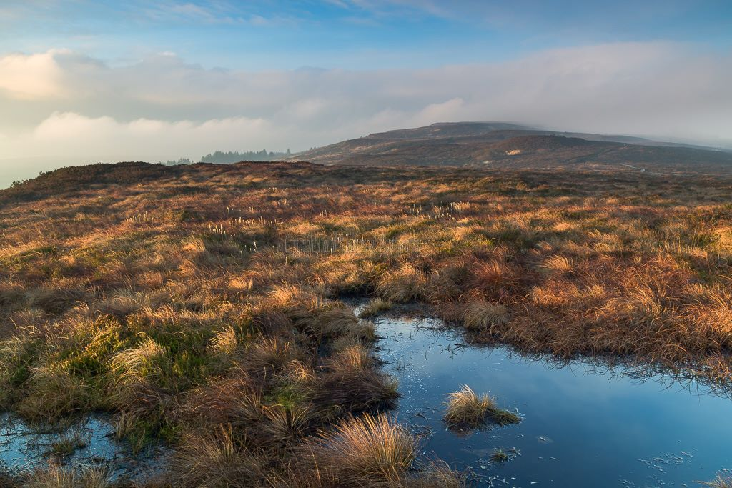 1173-Dawn on Ridge of Capard Slieve Bloom Mountains Laois