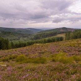 1180 Glenregan Slieve Bloom Mountains Offaly