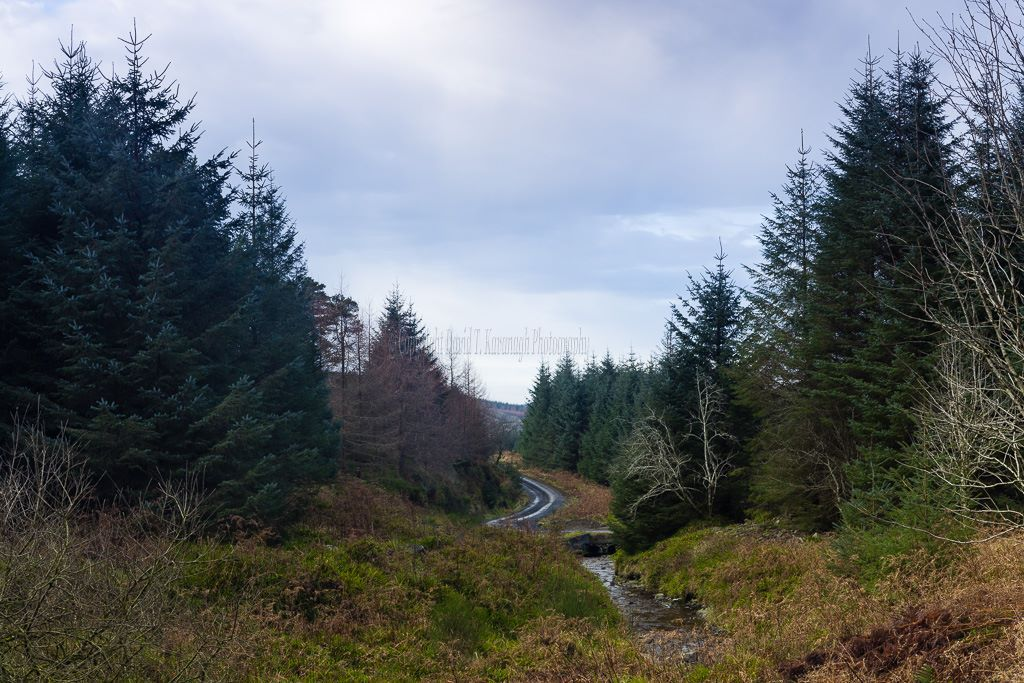 1182 Glenafelly Morining Slieve Bloom Mountains Offaly