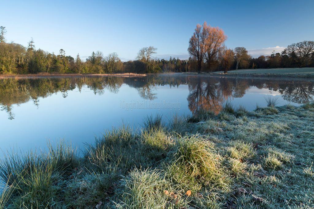 1188-Lake at Dawn Birr Castle Demesne