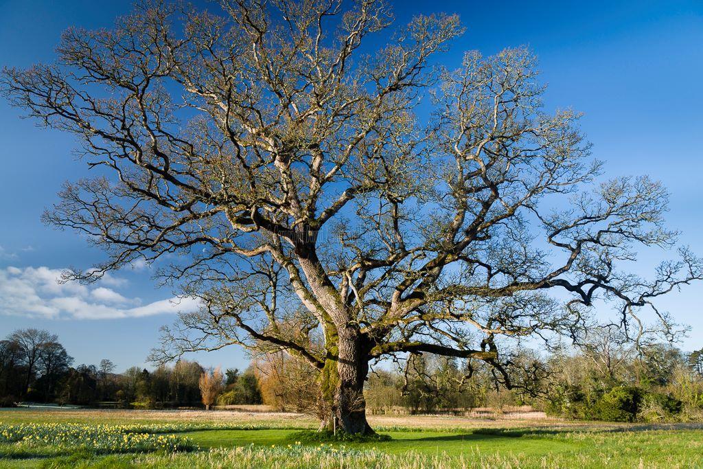 1191-The Carroll Oak Birr Castle Demesne