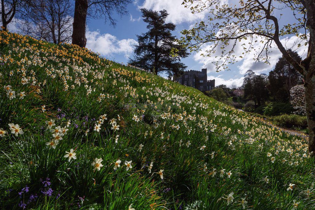 1195-River Walk Birr Castle Demesne
