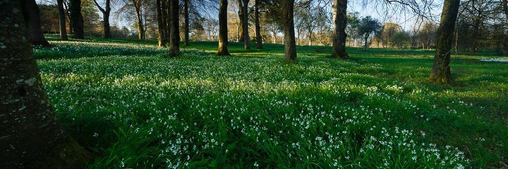 1196P-Forest Carpet Birr Castle Demesne