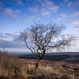 1199-Lone Tree Glenletter Slieve Bloom Offaly Ireland