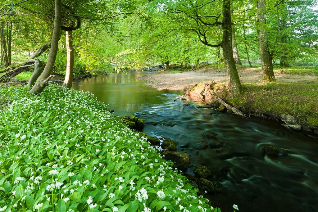 1200-River Clodiagh Tullamore Offaly Ireland