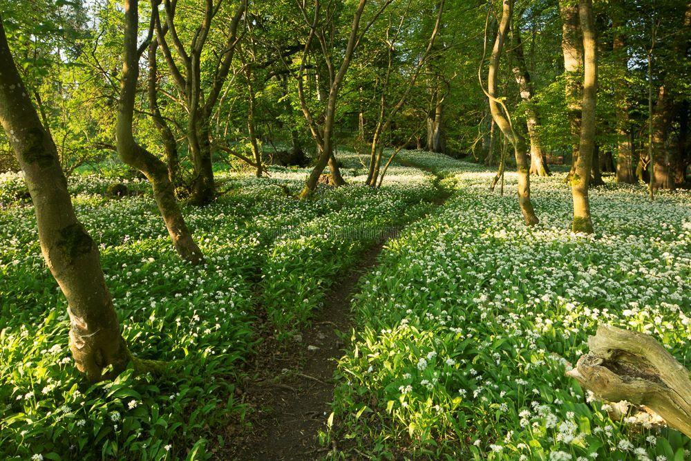 1206-Wild Garlic Path Charleville Estate Offaly Ireland