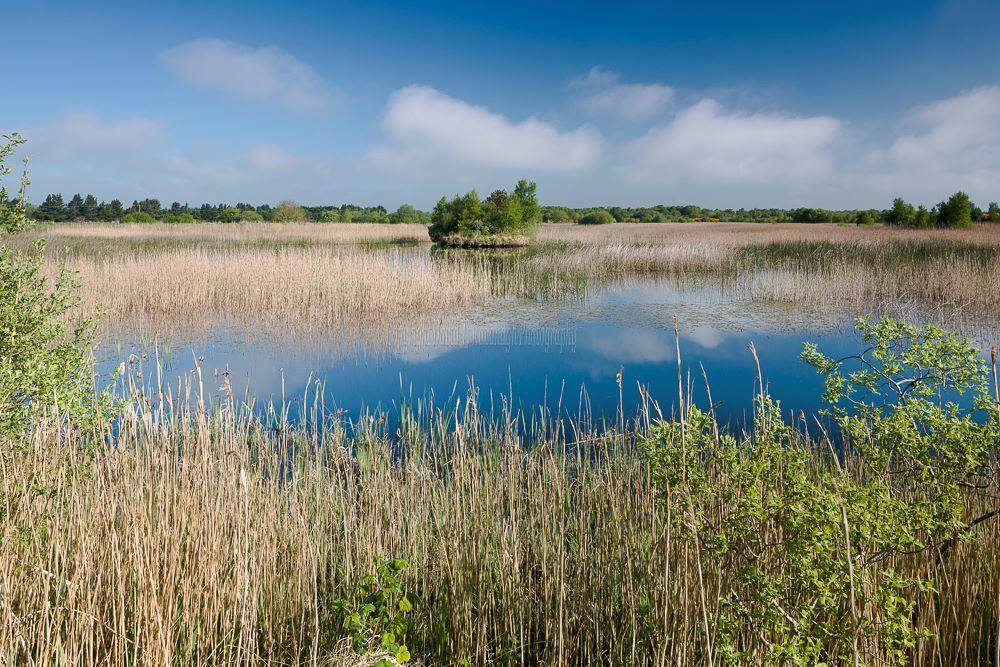 1209-Turraun Lagoon Offaly Ireland
