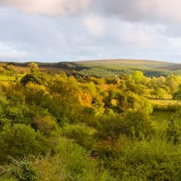 1227P-Barlahan Slieve Bloom Mountains Offaly Ireland
