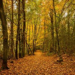 1231-Lacca Wood Laois Ireland