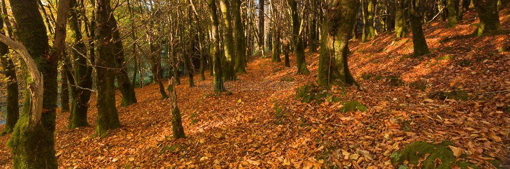 1232P-Monicknew Woods Slieve Bloom Mountains Laois Ireland