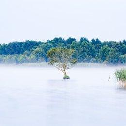 1253-Lone Tree Lough Boora