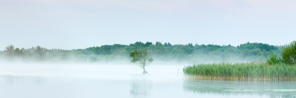 1261P-Lough Boora Lone Tree