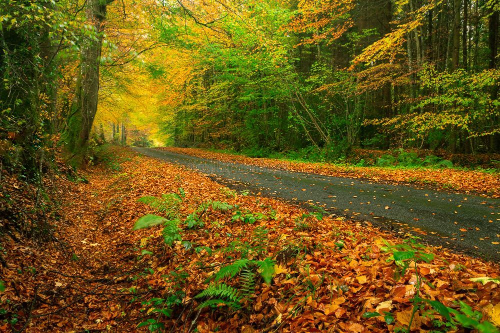 1286-Autumn Road Clonad