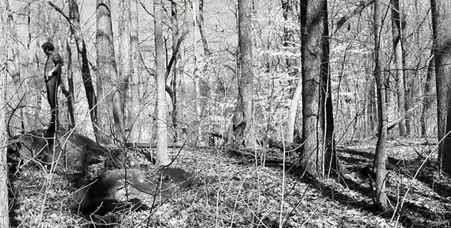 54  Trees