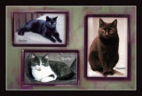 Beloved cats in a montage