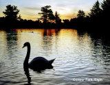 018  Sunrise, Cooper Park, Elgin