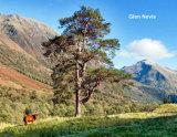 356  Glen Nevis