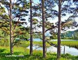 415  Loch Pityoulish
