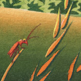 Force of Nature detail : Soldier beetle
