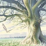 Blue Oak detail