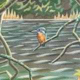 River Birch detail