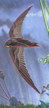 Swift detail