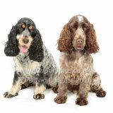 076 160813-Belle & Ruby