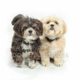 090 160821-Mo Ruby & Ella
