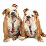 155 160911-Rufus & Samson