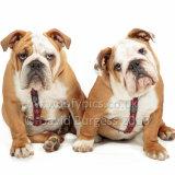 161 160911-Rufus & Samson