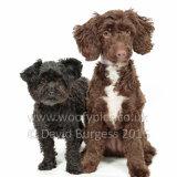 185 160717-Daisy & Poppy