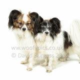 234 160821-Izzy & Milly