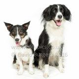 528 160821-Bella & Alfie