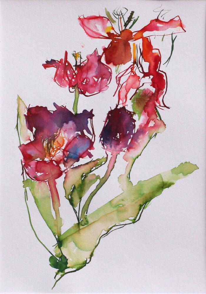 Spent Tulips