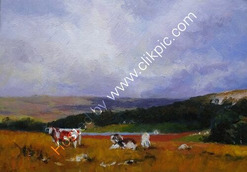 Cattle in the Yorkshire Dales