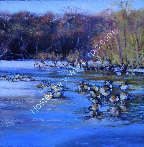Geese, Wyndley Pool