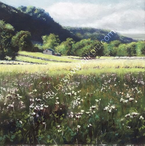 Wild Flowers, Yorkshire Dales
