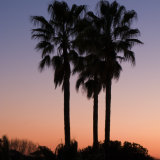 Sunset with palm trees, Rome, Italy