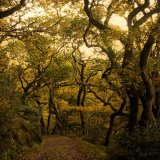 Cornish Woodland Path