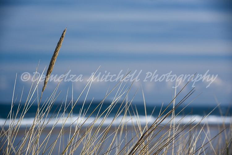 Grasses, Bamburgh Beach
