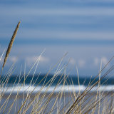 Grasses, Bamburgh Beach
