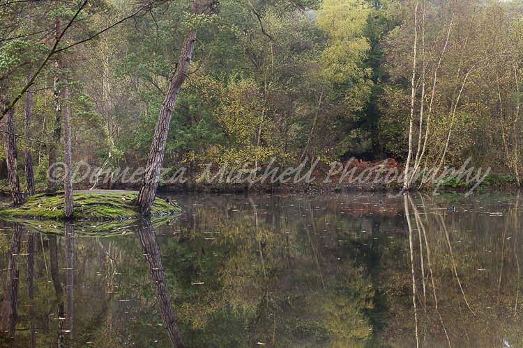 Reflections - Simon's Wood, Berkshire