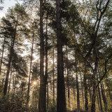 Rays - Simon's Wood, Berkshire