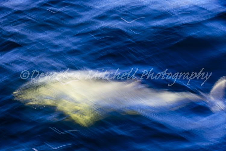 Dolphin impression, Doubtful Sound