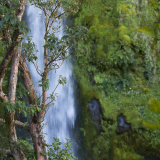 Dawson Falls, Taranaki