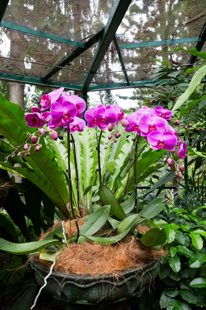Orchid17