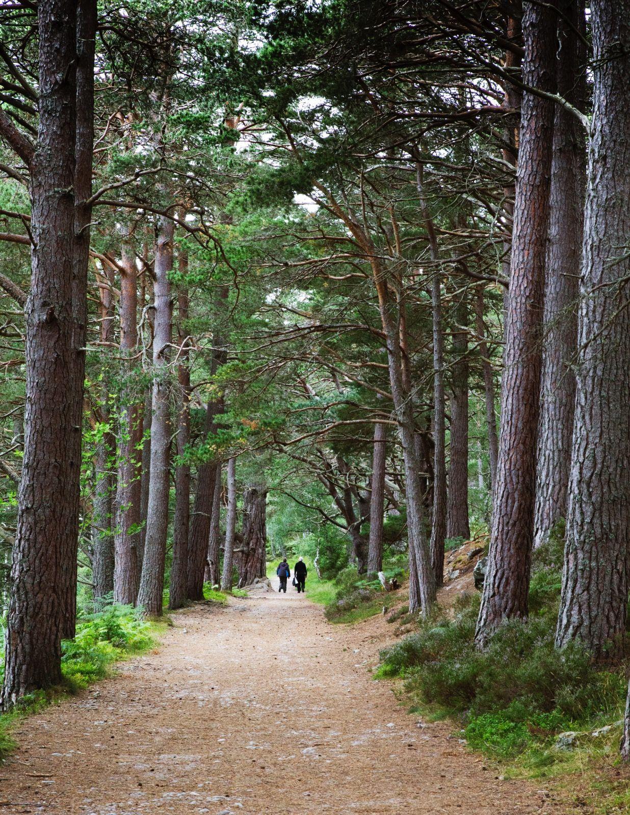 Scots Pines Avimore