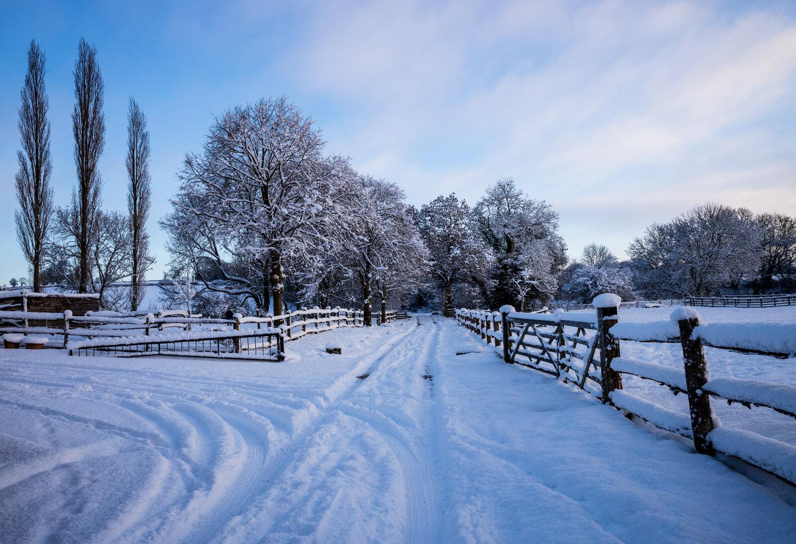 Snowy Medows