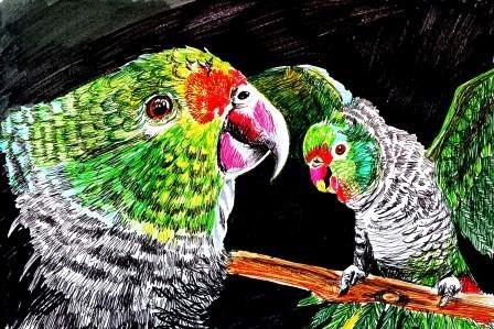 Endangered parrots