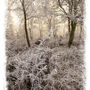 Haldon Hoar Frost